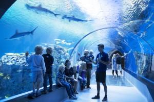 The Ocean tunnel Picture: Den Blaa Planet