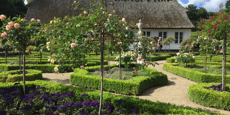 Afternoon tea in the most lovely of rose gardens – a different ...